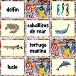 Animaux Marins en espagnol