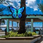 Attraper des Papillons