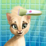 Chat Coiffeur