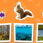 Habitat: où vivent les animaux?
