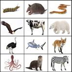 Écouter les animaux en anglais