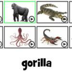 Déchiffrer les noms d'animaux en anglais