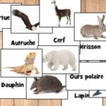 Noms d'Animaux en Français
