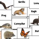 Noms d'animaux en Anglais