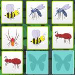 Paires et Mémoire d'insectes
