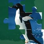 Puzzles de Pingouins