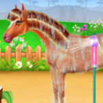 Prendre soin d'un cheval