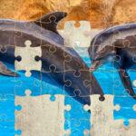 Puzzle de Dauphins 64 pièces