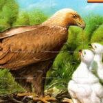 Puzzles d'oiseaux en ligne