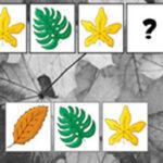 Séquences avec les feuilles d'automne