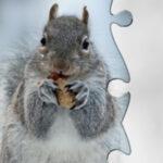 Puzzles d'hiver en ligne
